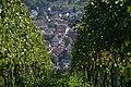 Pfaffenweiler durch die Weinreben.jpg