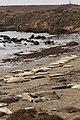 Piedras Blancas Elephant Seal Rookery, CA, USA - panoramio (1).jpg