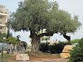 PikiWiki Israel 16442 Cities in Israel.JPG