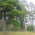 Pines Park 5.jpg