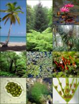 Plants 1.png