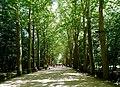 Platanus lane - Chenonceau, France - panoramio.jpg