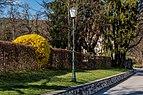 Poertschach Hans-Pruscha-Weg 5 Forsythien in Bluete 30032017 7242.jpg