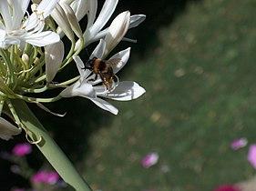 Polinização por insecto.JPG