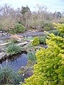 Ponds at Rock Garden, Wisley - geograph.org.uk - 322333.jpg