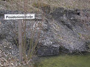 Posidonia Shale - Posidonia Shale at Hesselberg