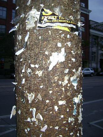 Staple (fastener) - Paper staples in a utility pole in Little Italy, Toronto.