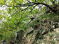 Pulkautal westlich von Pulkau sl1.jpg