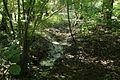 Réserve naturelle régionale des étangs de Bonnelles le 26 mai 2017 - 25.jpg