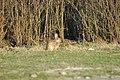 Rabbit2007-03-13 (14).JPG