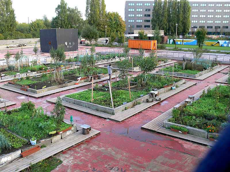 Urban growing in Ghent, Belgium. Raised beds and the concrete floor of a demolished factory protect crops from the contaminated ground below