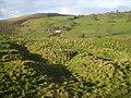 Radnor Castle motte - geograph.org.uk - 680424.jpg
