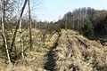 Railway line Drawski Mlyn Bzowo Goraj (2).JPG