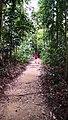 Rain forest 5.jpg