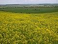 Rape crop near Wallington - geograph.org.uk - 16358.jpg