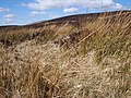 Reeds below Meall Odhar - geograph.org.uk - 394322.jpg