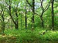 Rezerwat Ostra Góra Polska 20.jpg