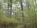 Rezerwat przyrody Dęby w Meszczach 12.01.jpg