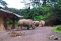Rhinoses.jpg
