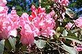Rhododendronpark Bremen 20090513 257.JPG