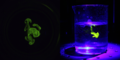 Riboflavin Fluorescence 04.png