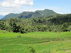 Ricefields and forested hills 13 km N of Venilale.jpg