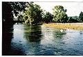 River Wylye at Stoford - geograph.org.uk - 317478.jpg