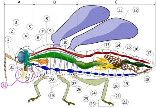 Insectes Wikiwand
