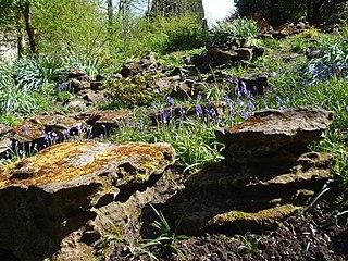 Rock garden garden with rocky soil