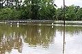 Roman Forest Flooding - 4-18-16 (26514831695).jpg