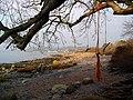 Rope swings near Rockcliffe - geograph.org.uk - 1102659.jpg