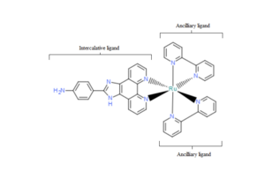 DNA-binding metallo-intercalators - Image: Ru(bpy)2(paip)2+