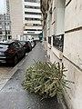 Rue Nélaton (Paris) - un arbre de noël à jeter dans la rue.jpg