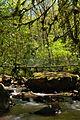 Ruisseau de Bardes, Arifat - 10.jpg