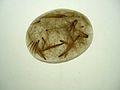 Rutilated quartz cabochon.jpg