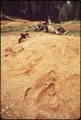 SAWDUST PILE IN BIG STUMP MEADOW - NARA - 542733.tif