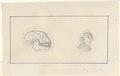 Saguinus oedipus - 1788-1863 - Print - Iconographia Zoologica - Special Collections University of Amsterdam - UBA01 IZA1000476.tif