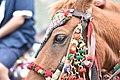 Saif ul mulook horse 2.jpg