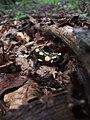 Salamander 03082008.jpg