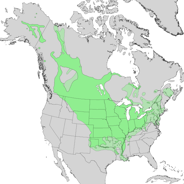 File:Salix interior range map 1.png