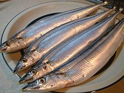 Sanma for sashimi by tsuchiya.yoshihiro