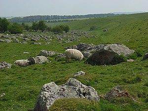 Fyfield Down - Image: Sarsen stones, Fyfield Down geograph.org.uk 412186