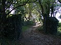 Secluded lane behind Goodwick Moor - geograph.org.uk - 577630.jpg