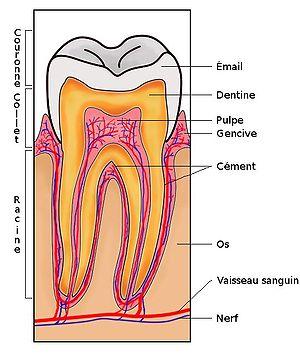 الضغط العصبي على الاسنان قد يرتبط بالقلق المزمن والتوتر