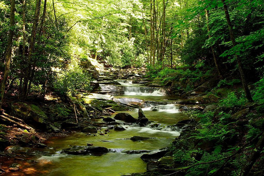 File:Seneca-creek-stream ForestWander.JPG - Wikimedia Commons