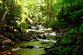 Seneca-creek-stream ForestWander.JPG