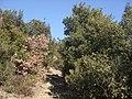 Sentiero alle falde del Camurcina - panoramio.jpg