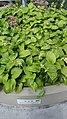 Seoullo 7017 plants.jpg