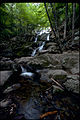 Shenandoah National Park SHEN9210.jpg
