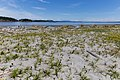 Sidney Spit (part of Gulf Islands National Park Reserve), Sidney Island, British Columbia, Canada 01.jpg